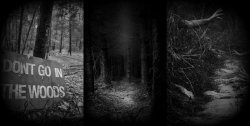 Fear In The Forest The Epping Forest Ghost Hunt Essex